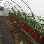 farms for children composting tomatoes